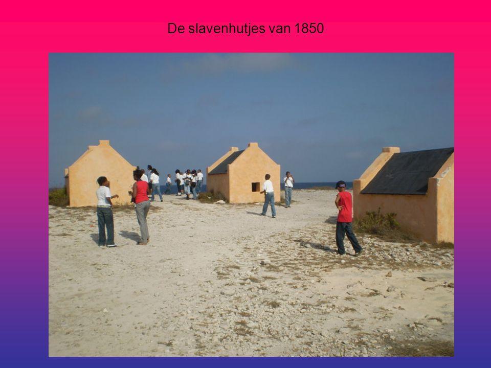 Groepsfoto bij de slavenhutjes