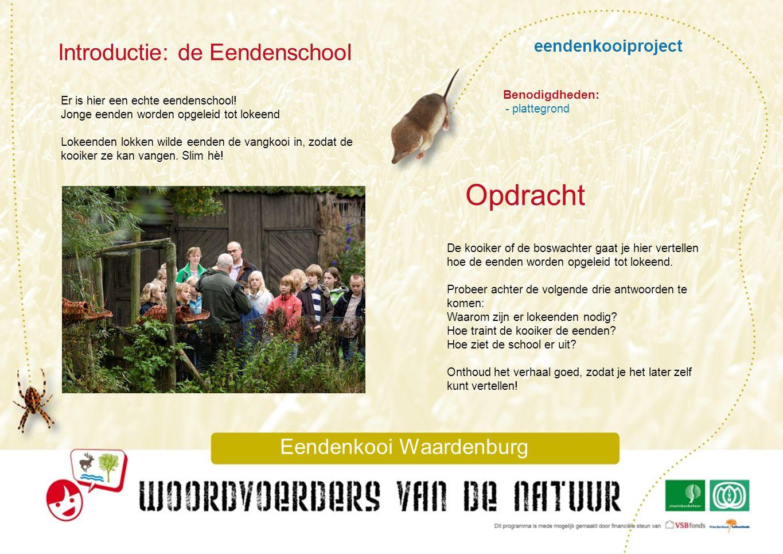 eendenkooiproject Introductie: de Eendenschool Eendenkooi Waardenburg Er is hier een echte eendenschool! Jonge eenden worden opgeleid tot lokeend Loke