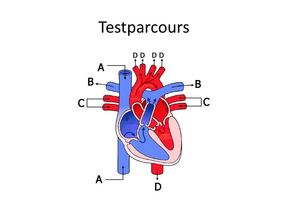 Specificatie Stuk pijp van 20 cm, doorsnede 4.5 cm, bevestig hartklep hierin Hart: twee cilinders, een voor 'grote circulatie' en een voor 'kleine circulatie' Pomp bootst hartslag na
