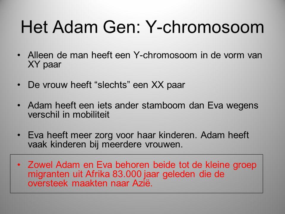 """Het Adam Gen: Y-chromosoom Alleen de man heeft een Y-chromosoom in de vorm van XY paar De vrouw heeft """"slechts"""" een XX paar Adam heeft een iets ander"""