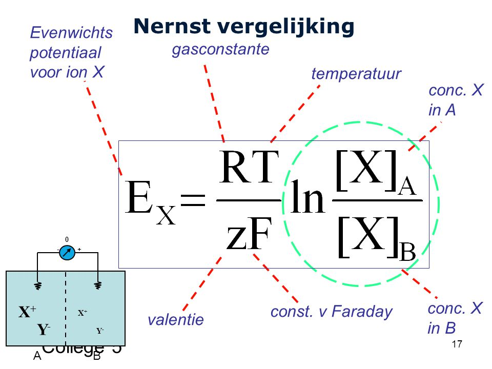 Cardiovascular Research Institute Maastricht (CARIM) College 5 17 Nernst vergelijking valentie temperatuur const.