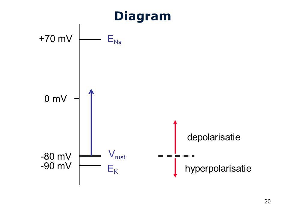 Cardiovascular Research Institute Maastricht (CARIM) 20 Diagram V rust E Na EKEK +70 mV -80 mV 0 mV -90 mV depolarisatie hyperpolarisatie