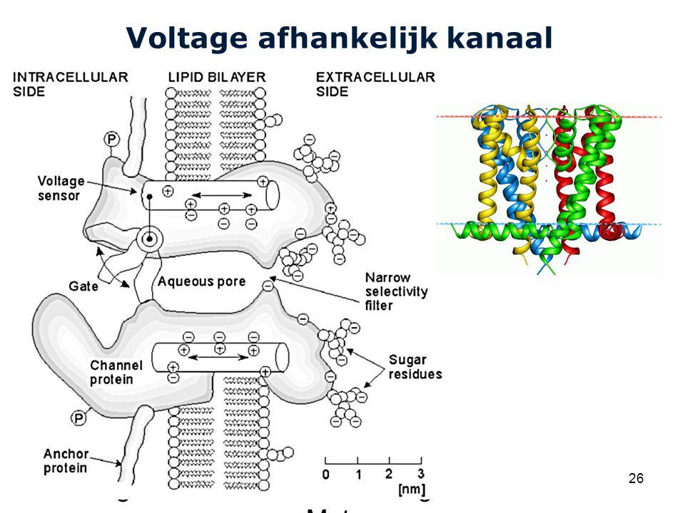 Cardiovascular Research Institute Maastricht (CARIM) College 58E020 Inleiding Meten 26 Voltage afhankelijk kanaal