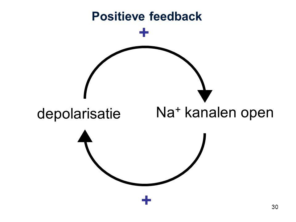 Cardiovascular Research Institute Maastricht (CARIM) 30 Positieve feedback depolarisatie Na + kanalen open + +