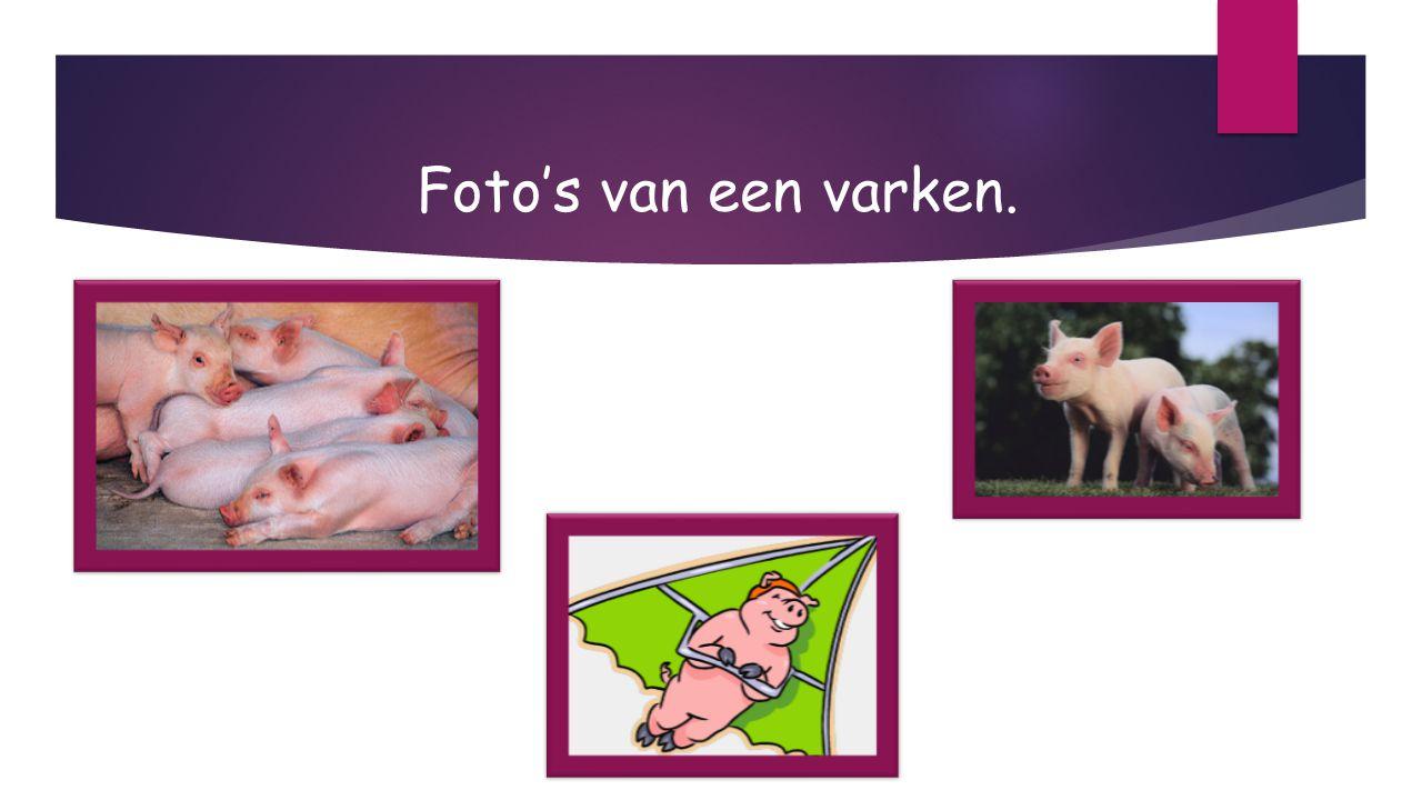 Foto's van een varken.