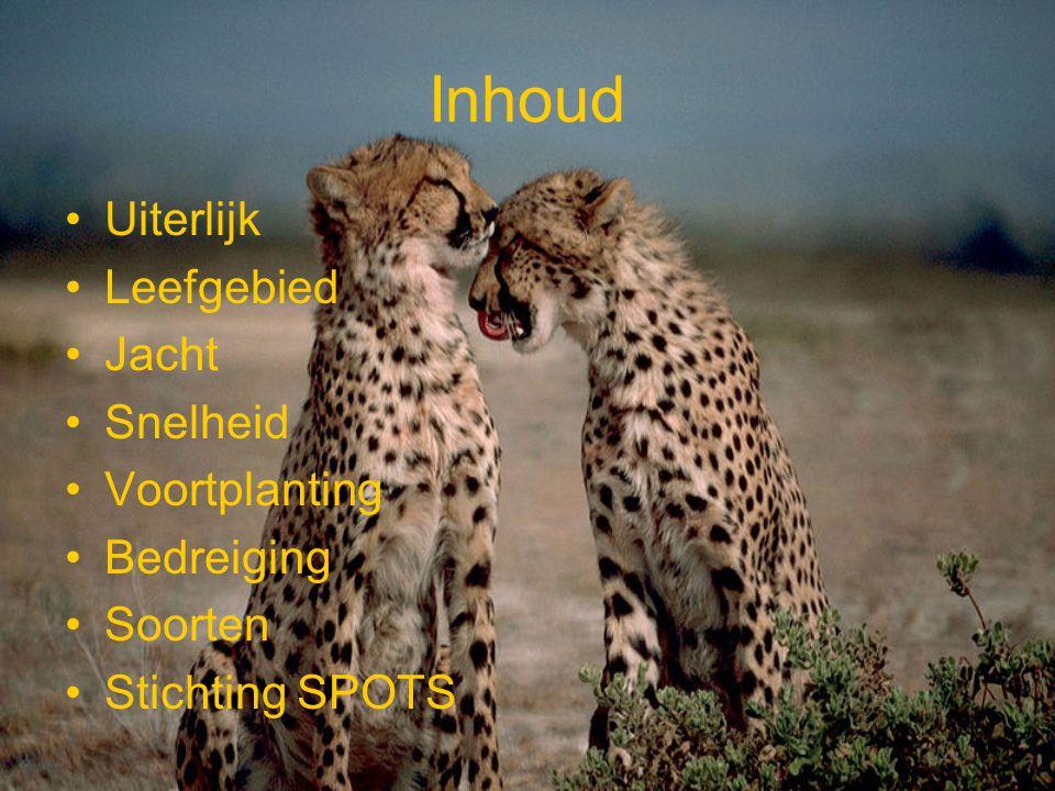 Uiterlijk De Cheeta heeft een oranje vacht met zwarte stippen.