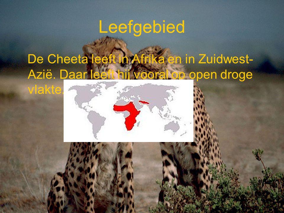 Leefgebied De Cheeta leeft in Afrika en in Zuidwest- Azië. Daar leeft hij vooral op open droge vlakte.