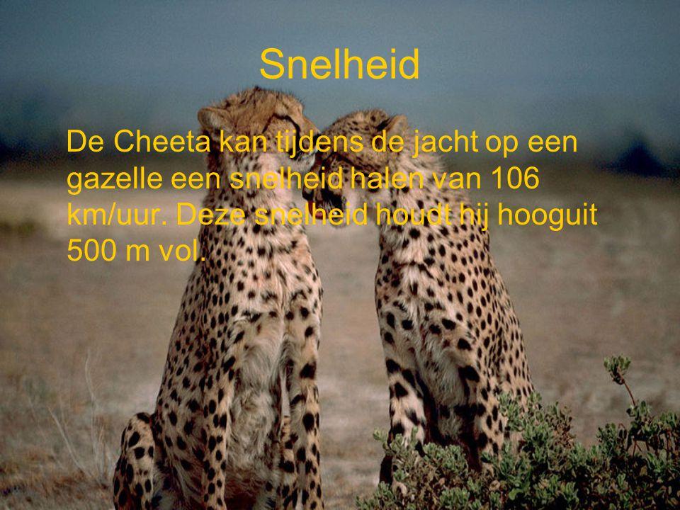 Snelheid De Cheeta kan tijdens de jacht op een gazelle een snelheid halen van 106 km/uur. Deze snelheid houdt hij hooguit 500 m vol.