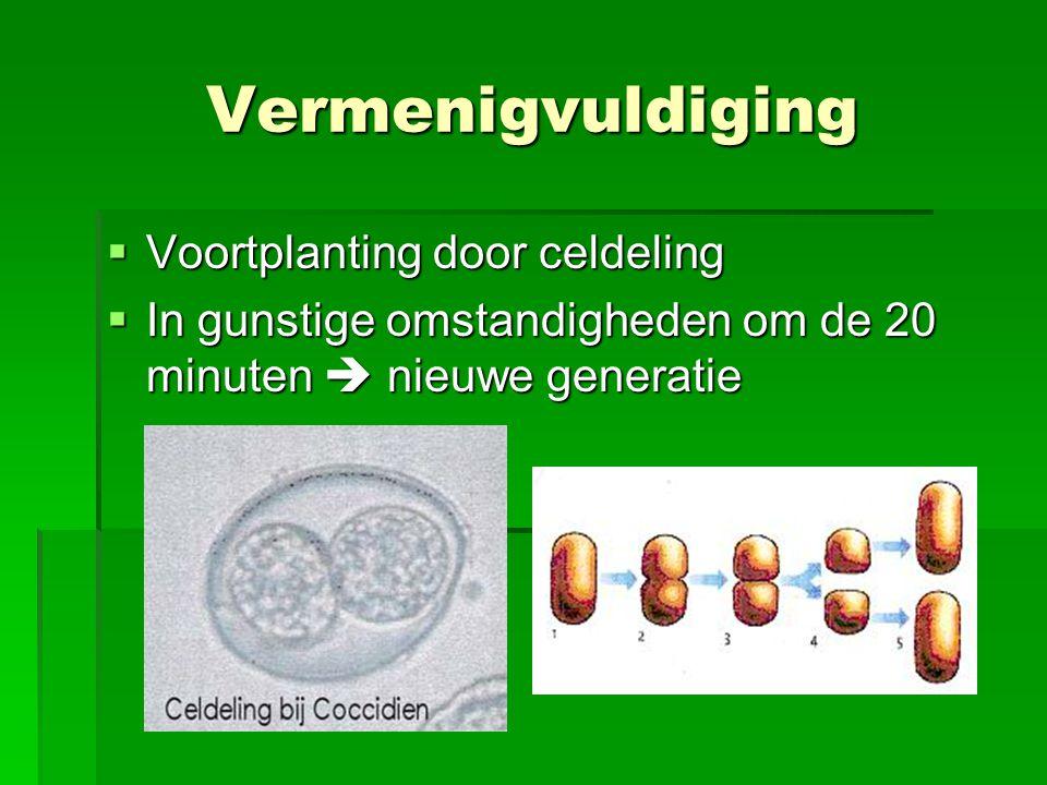 Vermenigvuldiging  Voortplanting door celdeling  In gunstige omstandigheden om de 20 minuten  nieuwe generatie