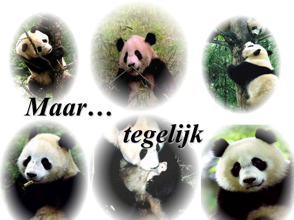 Het land van de panda's… Maar… tegelijk