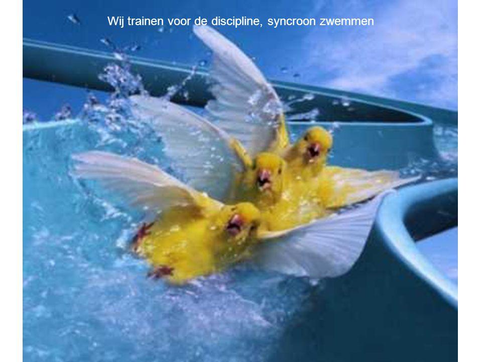 Wij trainen voor de discipline, syncroon zwemmen