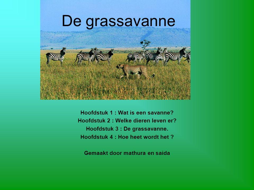De grassavanne Hoofdstuk 1 : Wat is een savanne.Hoofdstuk 2 : Welke dieren leven er.