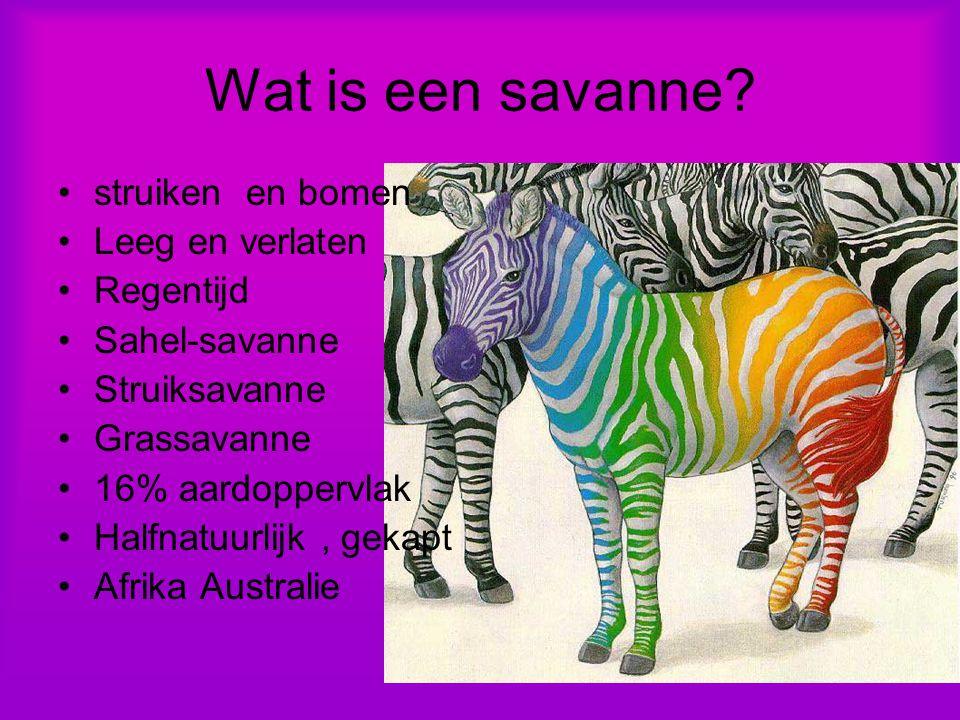 Wat is een savanne.