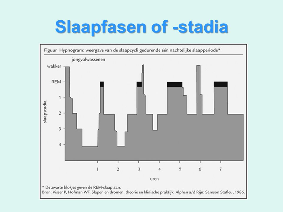 Slaapfasen of -stadia
