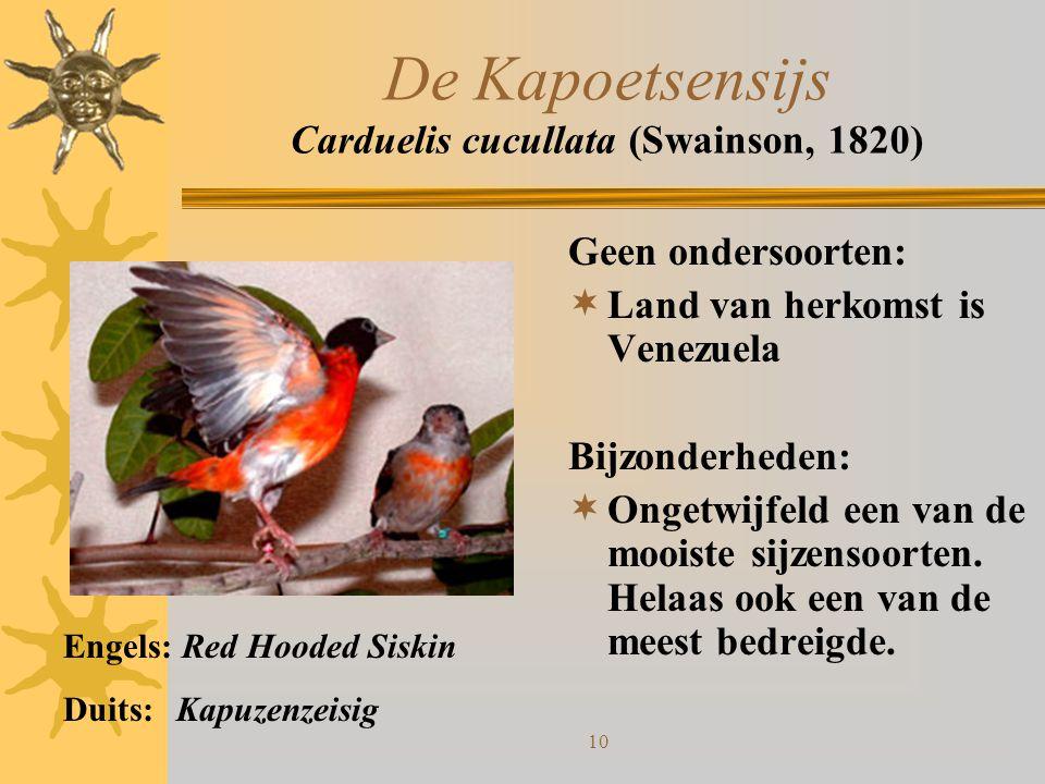 10 De Kapoetsensijs Carduelis cucullata (Swainson, 1820) Geen ondersoorten:  Land van herkomst is Venezuela Bijzonderheden:  Ongetwijfeld een van de