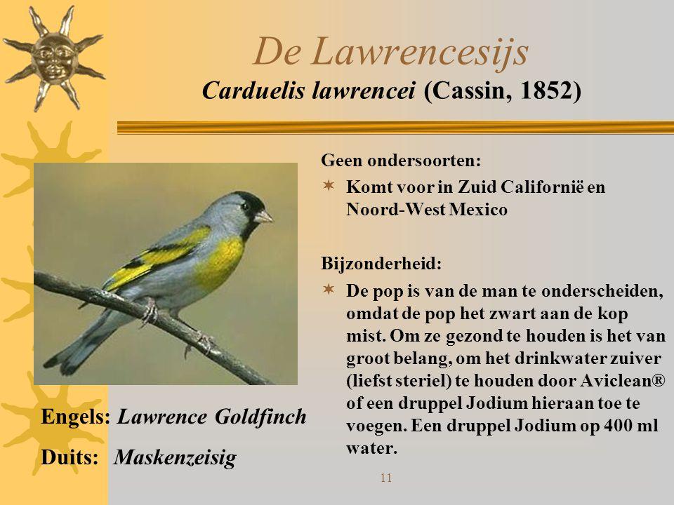 11 De Lawrencesijs Carduelis lawrencei (Cassin, 1852) Geen ondersoorten:  Komt voor in Zuid Californië en Noord-West Mexico Bijzonderheid:  De pop i