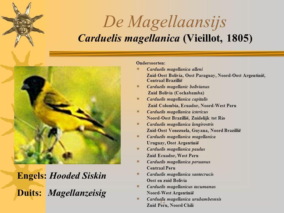12 De Magellaansijs Carduelis magellanica (Vieillot, 1805) Ondersoorten:  Carduelis magellanica alleni Zuid-Oost Bolivia, Oost Paraguay, Noord-Oost A