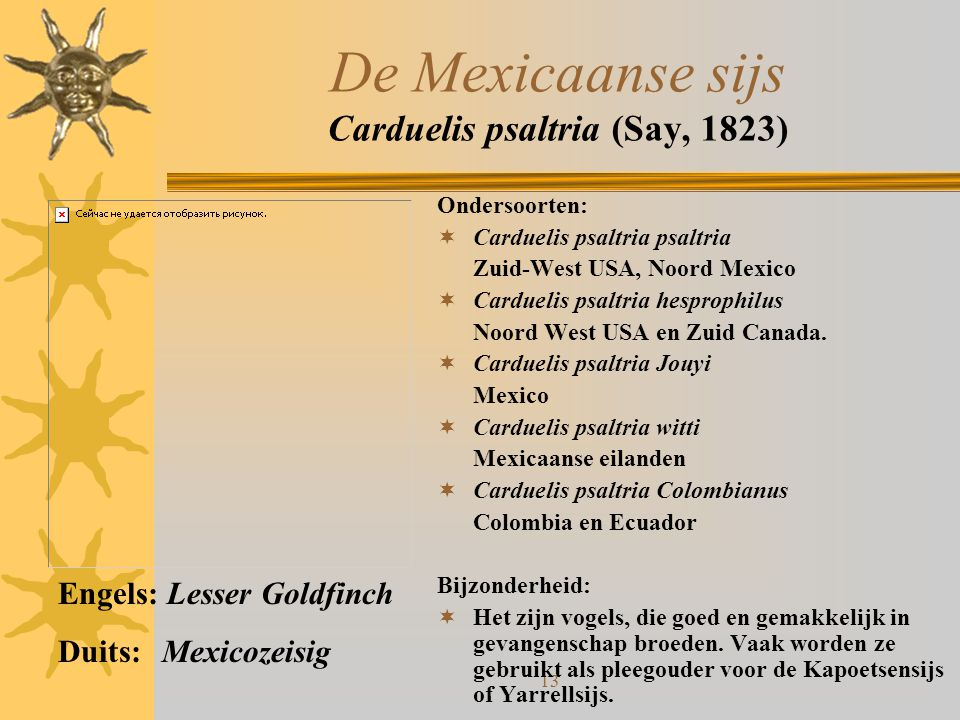 13 De Mexicaanse sijs Carduelis psaltria (Say, 1823) Ondersoorten:  Carduelis psaltria psaltria Zuid-West USA, Noord Mexico  Carduelis psaltria hesp