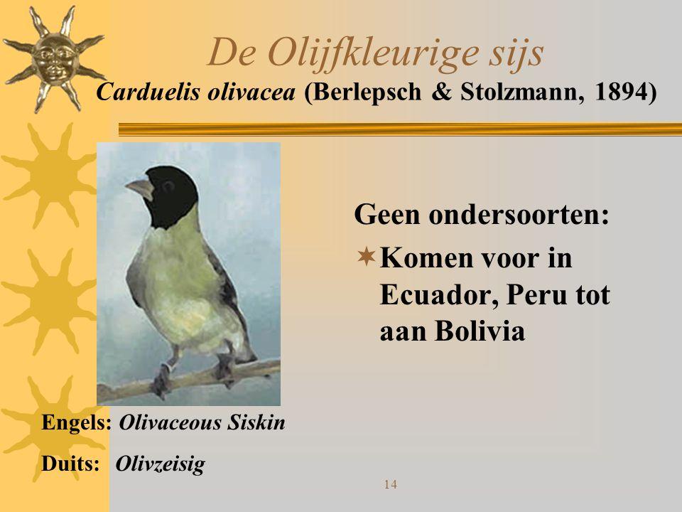 14 De Olijfkleurige sijs Carduelis olivacea (Berlepsch & Stolzmann, 1894) Geen ondersoorten:  Komen voor in Ecuador, Peru tot aan Bolivia Engels: Oli