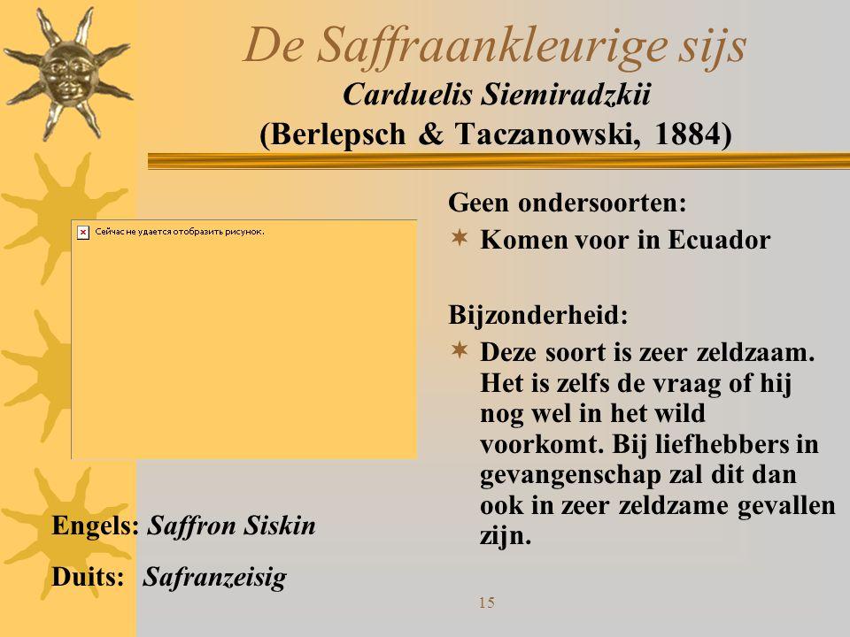 15 De Saffraankleurige sijs Carduelis Siemiradzkii (Berlepsch & Taczanowski, 1884) Geen ondersoorten:  Komen voor in Ecuador Bijzonderheid:  Deze so