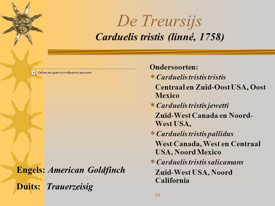 16 De Treursijs Carduelis tristis (linné, 1758) Ondersoorten:  Carduelis tristis tristis Centraal en Zuid-Oost USA, Oost Mexico  Carduelis tristis j