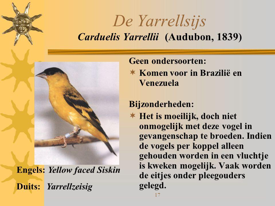17 De Yarrellsijs Carduelis Yarrellii (Audubon, 1839) Geen ondersoorten:  Komen voor in Brazilië en Venezuela Bijzonderheden:  Het is moeilijk, doch