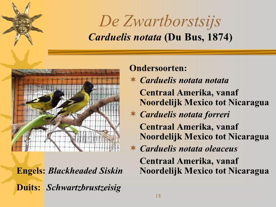 18 De Zwartborstsijs Carduelis notata (Du Bus, 1874) Ondersoorten:  Carduelis notata notata Centraal Amerika, vanaf Noordelijk Mexico tot Nicaragua 