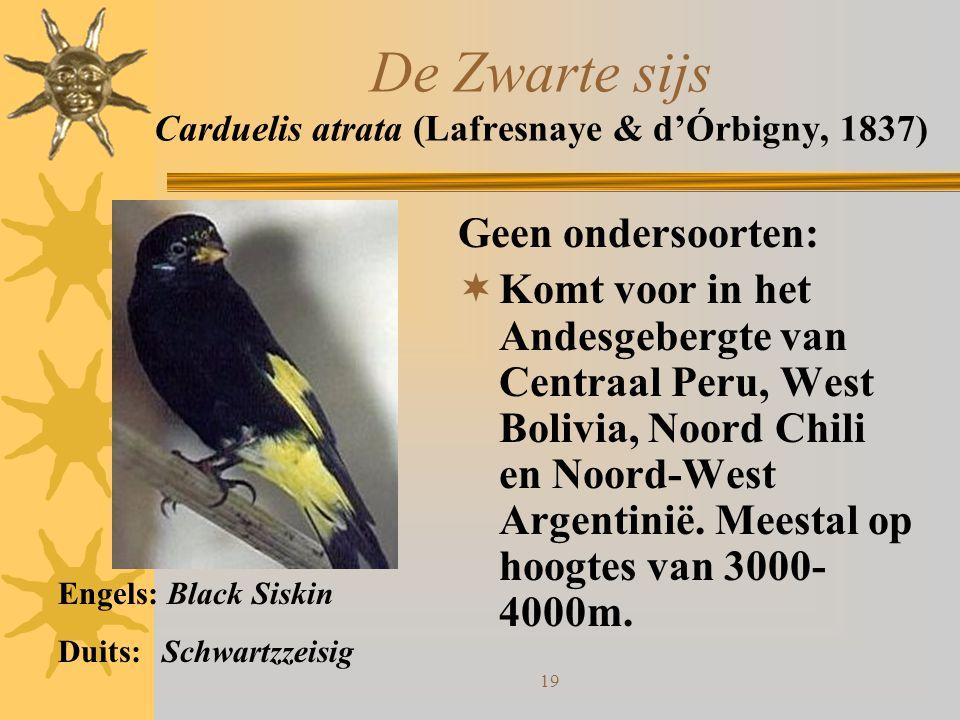 19 De Zwarte sijs Carduelis atrata (Lafresnaye & d'Órbigny, 1837) Geen ondersoorten:  Komt voor in het Andesgebergte van Centraal Peru, West Bolivia,