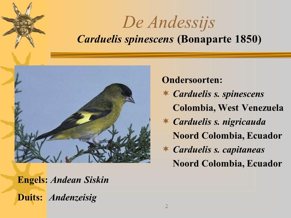 2 Ondersoorten:  Carduelis s. spinescens Colombia, West Venezuela  Carduelis s. nigricauda Noord Colombia, Ecuador  Carduelis s. capitaneas Noord C