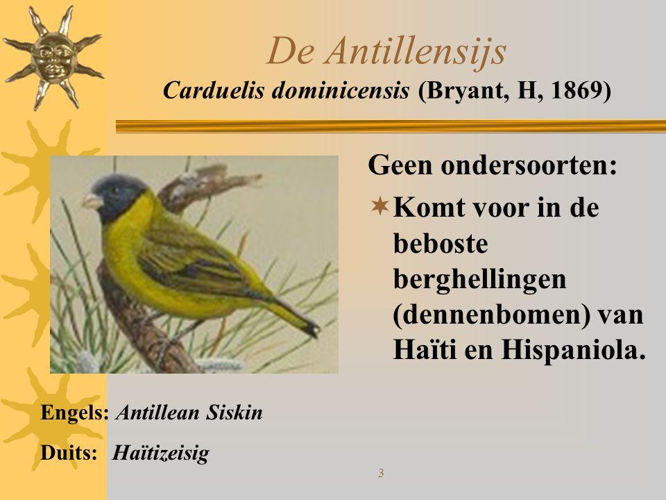 3 De Antillensijs Carduelis dominicensis (Bryant, H, 1869) Geen ondersoorten:  Komt voor in de beboste berghellingen (dennenbomen) van Haïti en Hispa