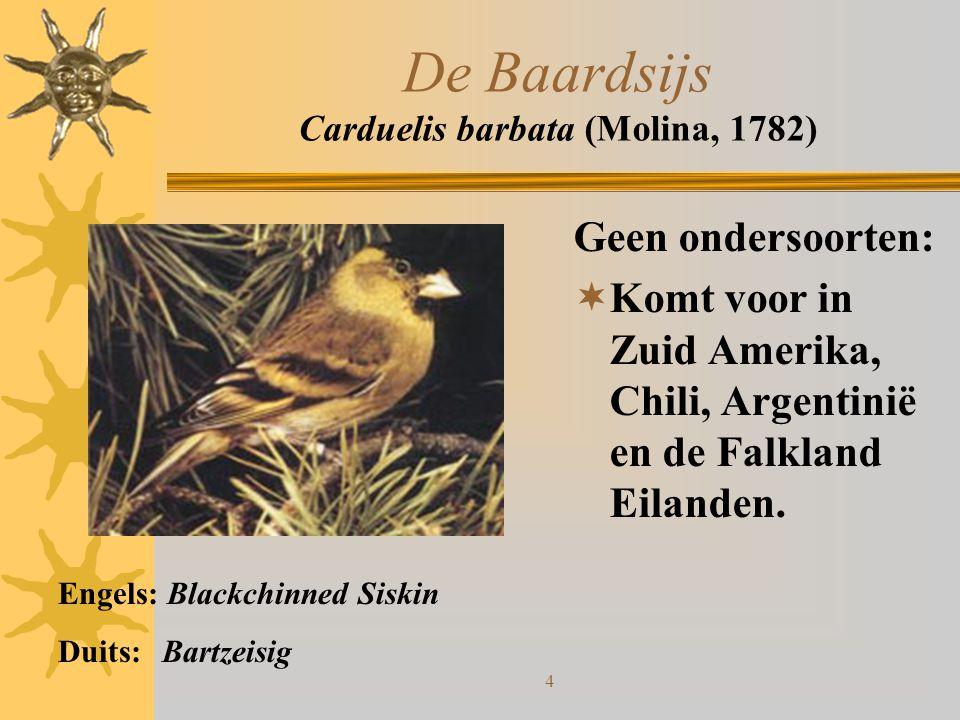 4 De Baardsijs Carduelis barbata (Molina, 1782) Geen ondersoorten:  Komt voor in Zuid Amerika, Chili, Argentinië en de Falkland Eilanden. Engels: Bla