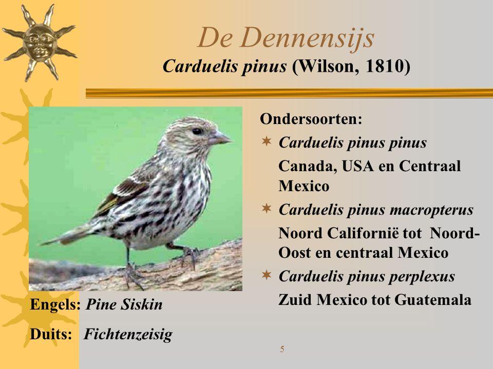 5 De Dennensijs Carduelis pinus (Wilson, 1810) Ondersoorten:  Carduelis pinus pinus Canada, USA en Centraal Mexico  Carduelis pinus macropterus Noor