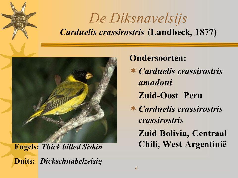 17 De Yarrellsijs Carduelis Yarrellii (Audubon, 1839) Geen ondersoorten:  Komen voor in Brazilië en Venezuela Bijzonderheden:  Het is moeilijk, doch niet onmogelijk met deze vogel in gevangenschap te broeden.