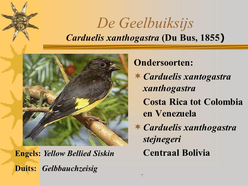 8 De Geelstuitsijs Carduelis uropygialis (Sclater, PL, 1862) Geen ondersoorten:  Komt voor in Zuid Peru tot in Chili en West Argentinië Engels: Yellow Rumped Siskin Duits: Kordillerenzeisig