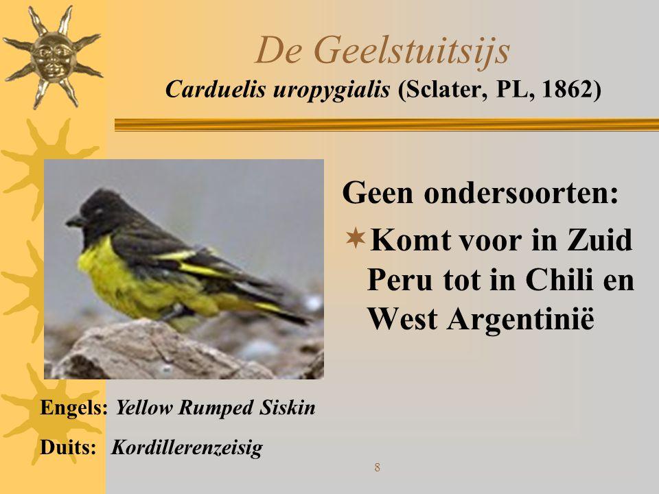 8 De Geelstuitsijs Carduelis uropygialis (Sclater, PL, 1862) Geen ondersoorten:  Komt voor in Zuid Peru tot in Chili en West Argentinië Engels: Yello