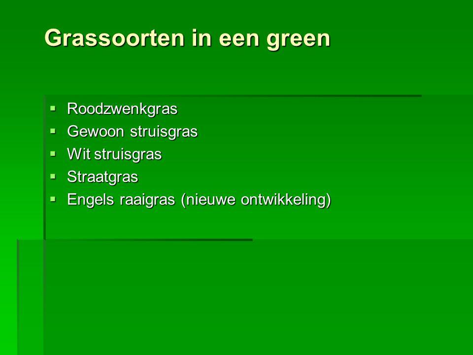 Grassoorten in een green  Roodzwenkgras  Gewoon struisgras  Wit struisgras  Straatgras  Engels raaigras (nieuwe ontwikkeling)