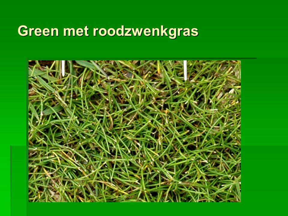 Green met roodzwenkgras