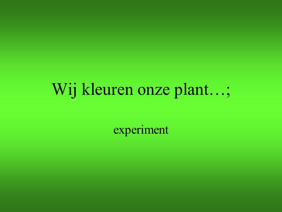 Wij kleuren onze plant…; experiment