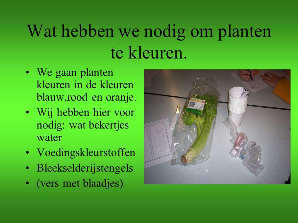 Wat hebben we nodig om planten te kleuren. We gaan planten kleuren in de kleuren blauw,rood en oranje. Wij hebben hier voor nodig: wat bekertjes water