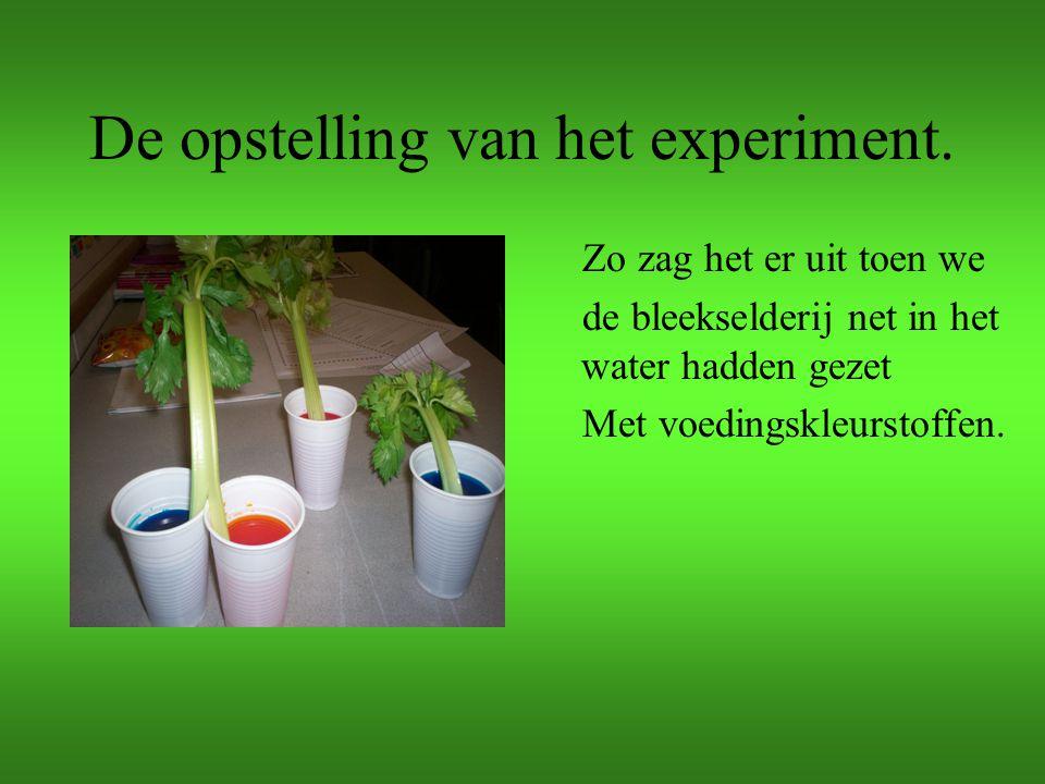 De opstelling van het experiment. Zo zag het er uit toen we de bleekselderij net in het water hadden gezet Met voedingskleurstoffen.