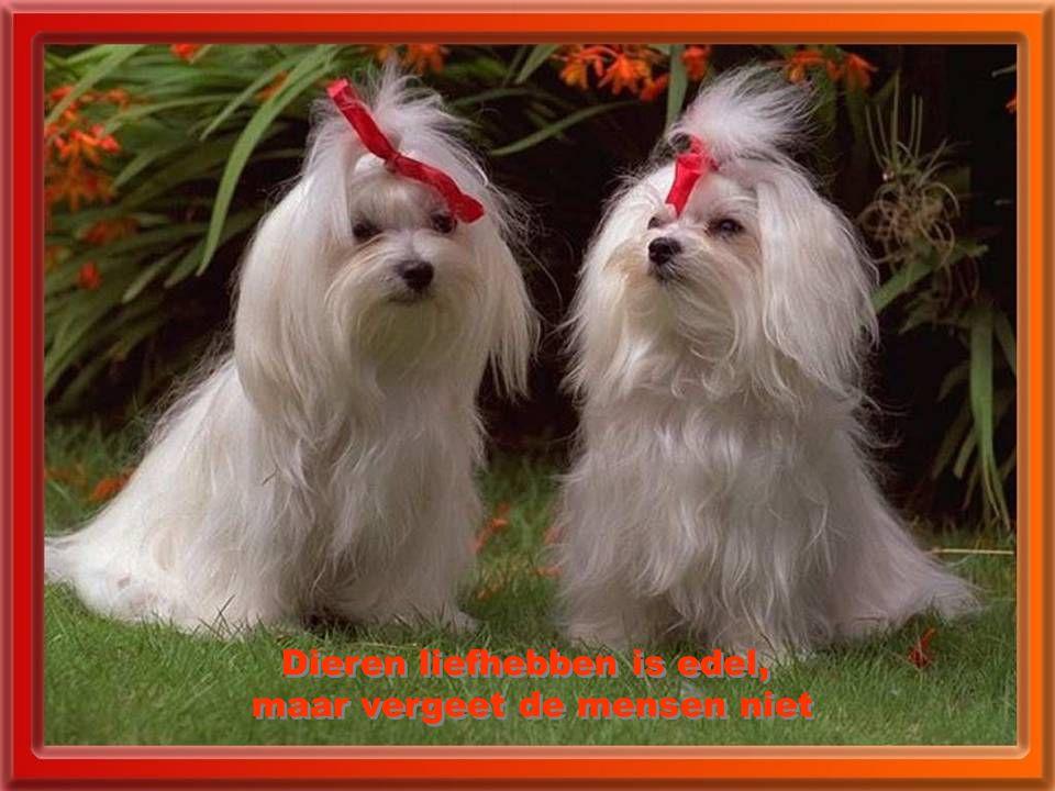 Dieren liefhebben is edel, maar vergeet de mensen niet Dieren liefhebben is edel, maar vergeet de mensen niet