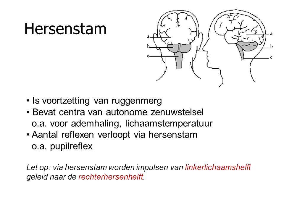 Hersenstam Is voortzetting van ruggenmerg Bevat centra van autonome zenuwstelsel o.a.