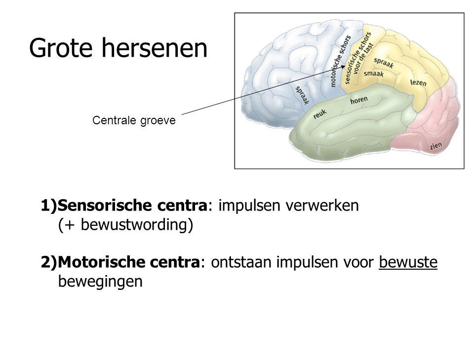 Ledematen naar verhouding tot grootte gebied in sensorische centra