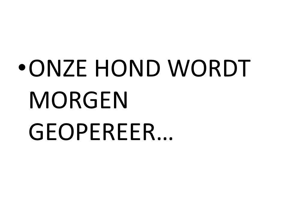 ONZE HOND WORDT MORGEN GEOPEREER…