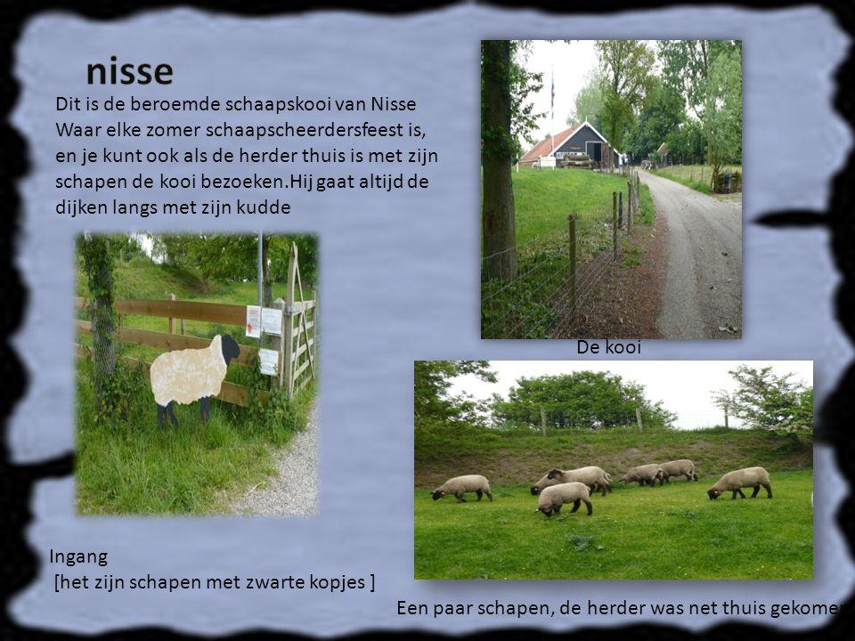 Dit is de beroemde schaapskooi van Nisse Waar elke zomer schaapscheerdersfeest is, en je kunt ook als de herder thuis is met zijn schapen de kooi bezoeken.Hij gaat altijd de dijken langs met zijn kudde Ingang [het zijn schapen met zwarte kopjes ] De kooi Een paar schapen, de herder was net thuis gekomen