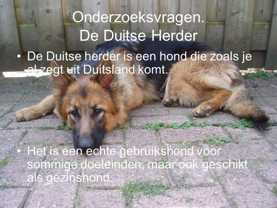 Onderzoeksvragen. De Duitse Herder De Duitse herder is een hond die zoals je al zegt uit Duitsland komt. Het is een echte gebruikshond voor sommige do