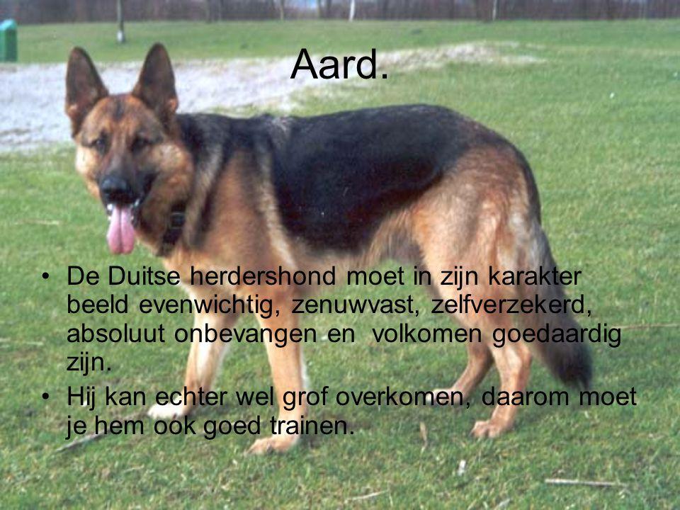 Aard. De Duitse herdershond moet in zijn karakter beeld evenwichtig, zenuwvast, zelfverzekerd, absoluut onbevangen en volkomen goedaardig zijn. Hij ka