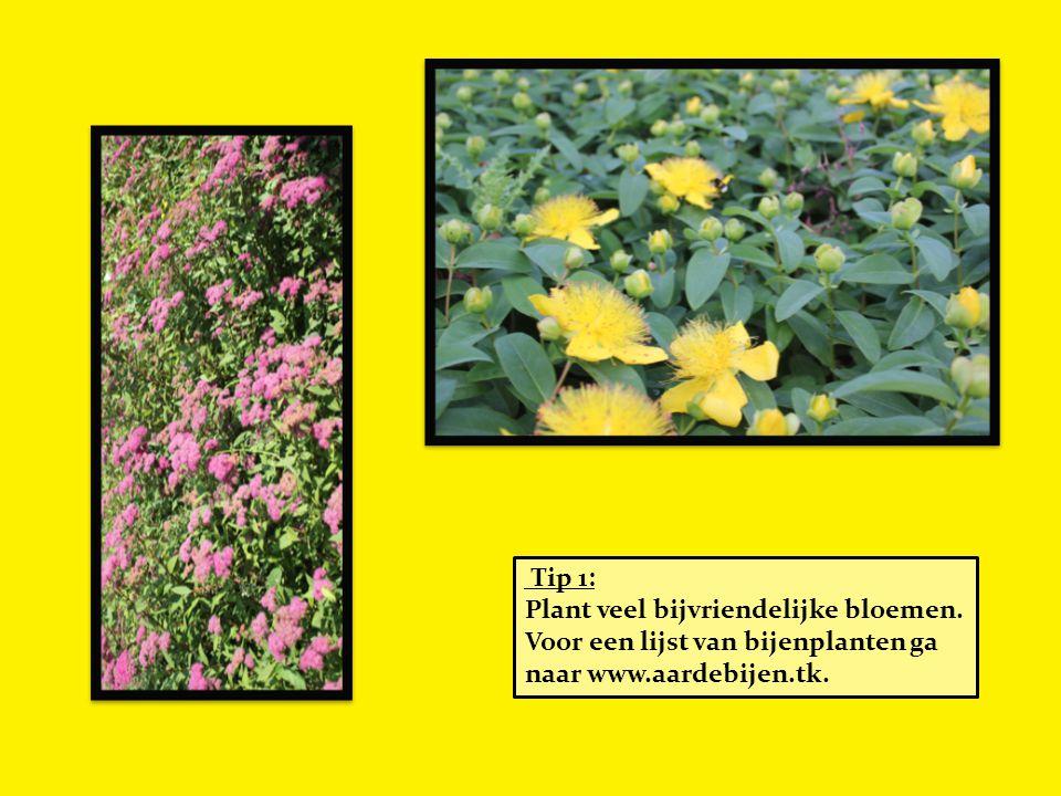 Tip 1: Plant veel bijvriendelijke bloemen. Voor een lijst van bijenplanten ga naar www.aardebijen.tk.