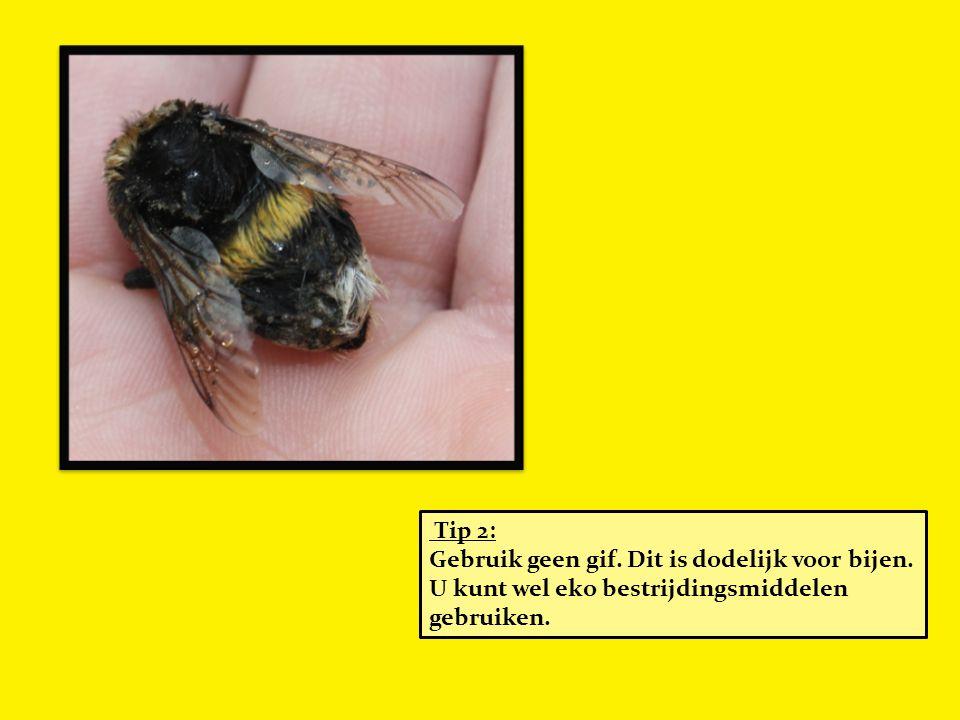 Tip 2: Gebruik geen gif. Dit is dodelijk voor bijen. U kunt wel eko bestrijdingsmiddelen gebruiken.