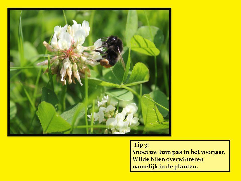 Tip 3: Snoei uw tuin pas in het voorjaar. Wilde bijen overwinteren namelijk in de planten.